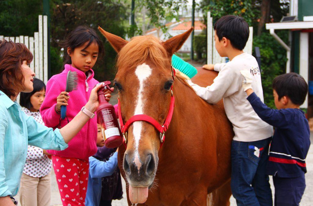 1.HorseCamp